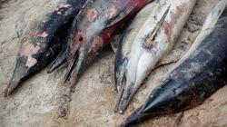 Γαλλία: Αριθμός ρεκόρ νεκρών δελφινιών ξεβράζεται στις ακτές της