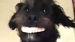 Dog Steals Family's Dentures And Makes The World