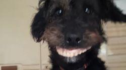 Ce chiot vole un dentier et c'est
