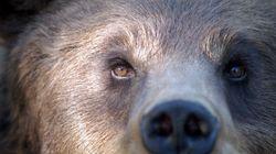 Dotiamo di Gps tutti gli orsi del
