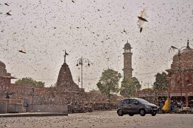 Σκοτείνιασε ο ουρανός από σμήνη ακρίδων σε πόλη της