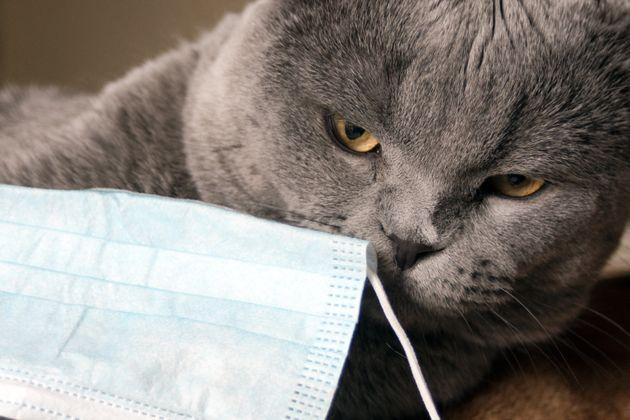 Gatto con raro virus morde padrona ad Arezzo, Ministero avvia