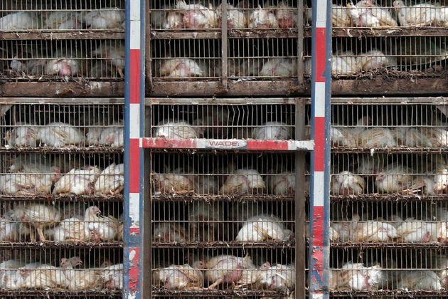 Opinion: Dont Pander To The US Cheap Food Lobby With Chlorinated Chicken