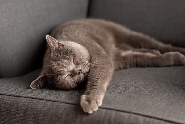 Nessun allarme per la scoperta del Lyssavirus in un gatto:
