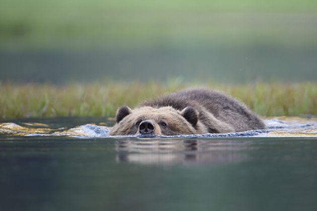 Βίντεο: Οικογένεια σώζει αρκούδα που είχε σφηνωθεί σε πλαστικό βαρέλι με
