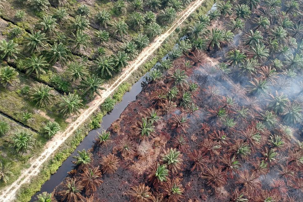 Clearing land and burning peatlands to make room for oil palm trees is a huge source of carbon emissions and air pollution.