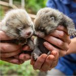 Stop What You're Doing And Look At All These Baby Animals Just Born At Columbus