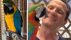 Il pappagallo di Enzo Salvi sta meglio: