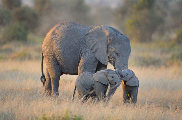 Des éléphants dans l'Amboseli National Park, au