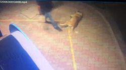 Κομοτηνή: Περαστικός κλώτσησε σκύλο - Τώρα θα αναγκαστεί να πληρώσει 30.000
