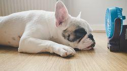 Ocho maneras de hacer más llevadero el calor a tu perro (porque él lo sufre más que