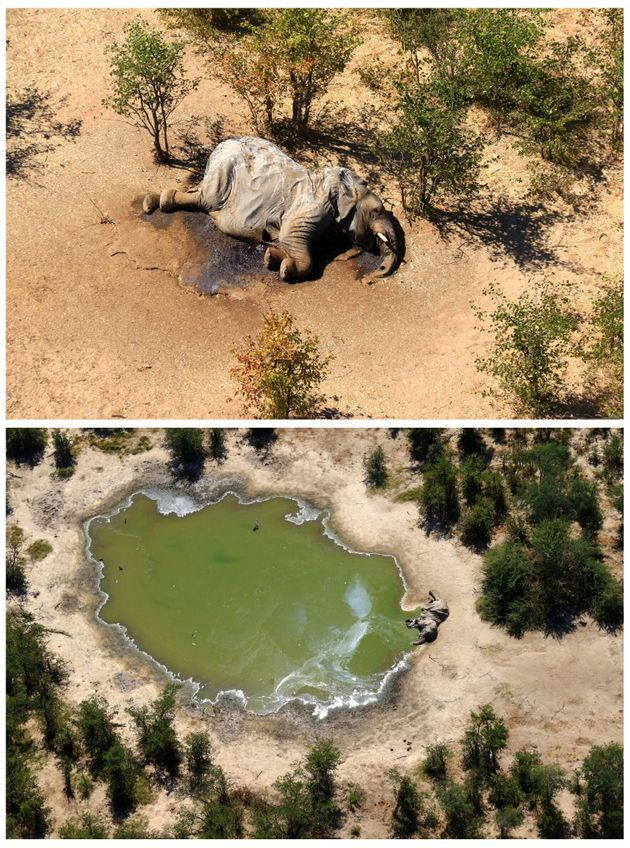 Authorities are investigating an investigation in the Okavango Delta, Botswana, Africa, where more than 350 elephants were killed in three months ago.