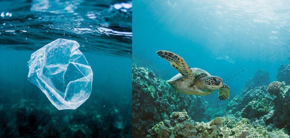 물에 떠다니는 해파리 등을 먹고 사는 바다거북이 비닐 등 플라스틱을 먹이로 착각하고 먹고 만다. 그 때문에 폐 손상을 입어 죽는 경우가 많고 해변에 주로 서식하는 바다표범류, 고래...