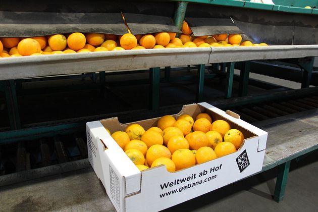 Μιχάλης Δερνίκος: Εξάγοντας πορτοκάλια στην
