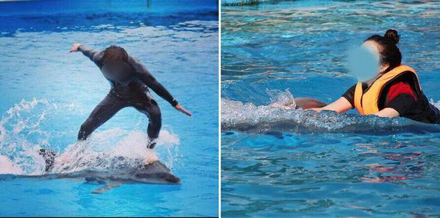 바다의 돌고래는 등에 무언가를 태우지 않는다. 돌고래 체험 프로그램이 위험한 이유들