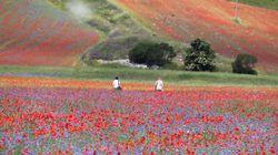 """Meraviglia a Castelluccio di Norcia: ecco la fioritura """"più bella di"""