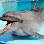 イルカのローラ、腎不全で死ぬ。40年間ショーで活躍「我が道を行く、一生懸命なイルカだった」