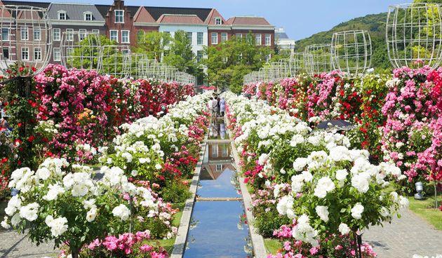 2,000品種のバラが集まる「グランドローズガーデン」