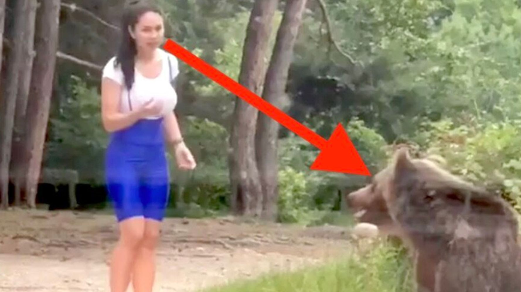 Here's A Quick Lesson On Why You Should Never, Ever Approach A Bear