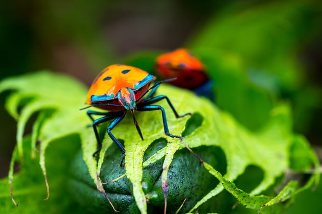L'apocalisse degli insetti, minaccia per l'ecosistema (di F. Pennacchio e S.