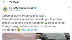 La Policía de Alcorcón recibe una llamada por la presencia de un cocodrilo, los agentes van y...