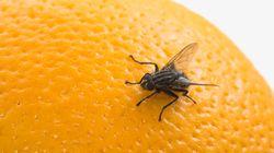 El sencillo y baratísimo truco para que las moscas no entren en
