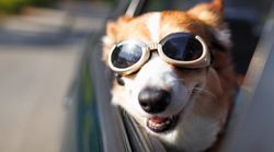 Cómo viajar con perros en