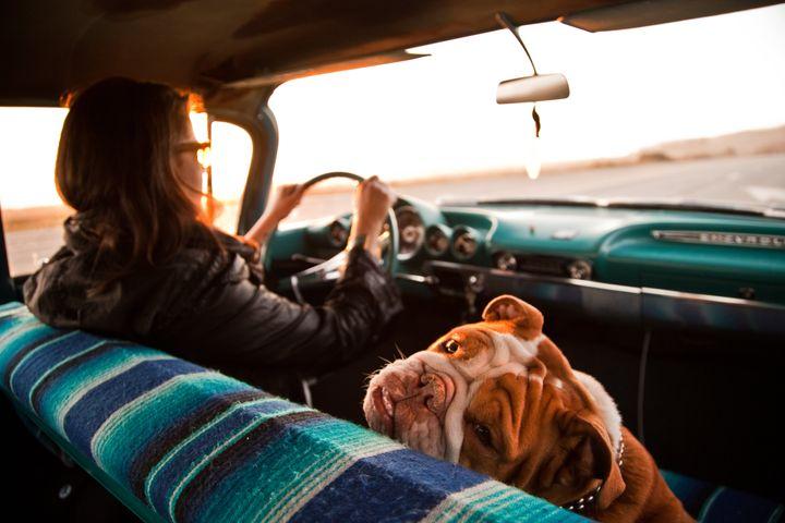 El perro NUNCA debe ir en el asiento del copiloto.
