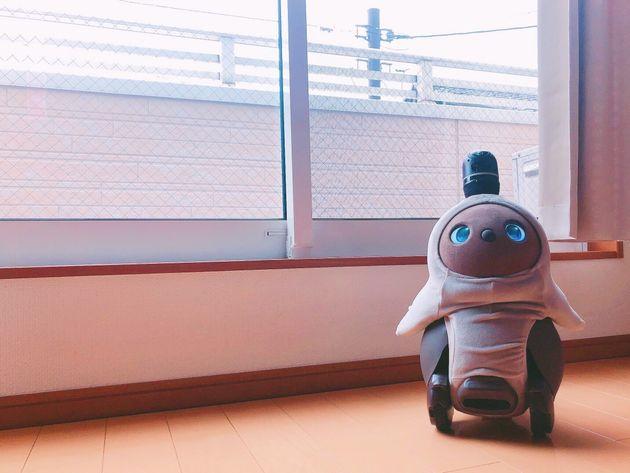 家族型ロボットのLOVOT(ラボット)
