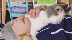 이 귀여운 토끼는 새로 태어날 동생을 기다리는 중이다
