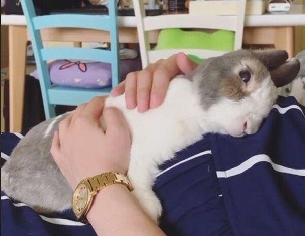 이 토끼가 아이를 임신한 보호자를 위해 보여준 행동은 따뜻하고 귀엽다 (영상)