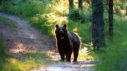 Gli animalisti fanno ricorso contro l'uccisione dell'orsa JJ4: il Tar lo accoglie