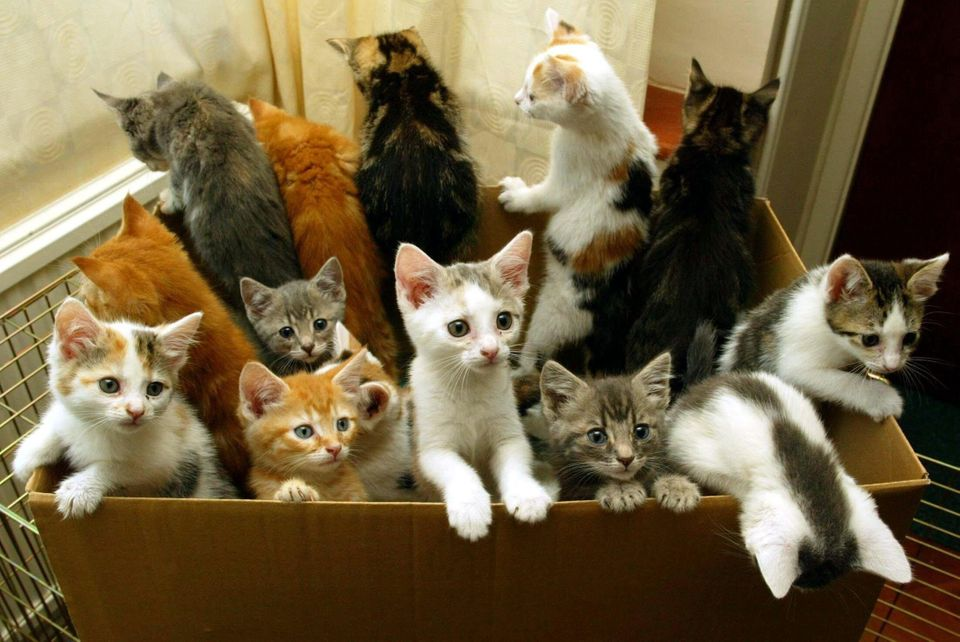 A study estimated as many as 84,000 extra kittens could be born this summer, raising concerns that unwanted...
