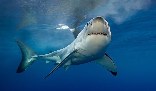 Επίθεση καρχαρία στην Αυστραλία - Νεκρός 17χρονος