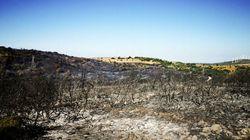 Υπό μερικό έλεγχο η φωτιά στην Κάρυστο αφού έπεσαν για λίγο οι