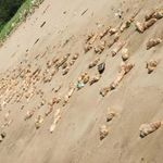 중국 해안서 의문의 돼지 족발 수만 개가