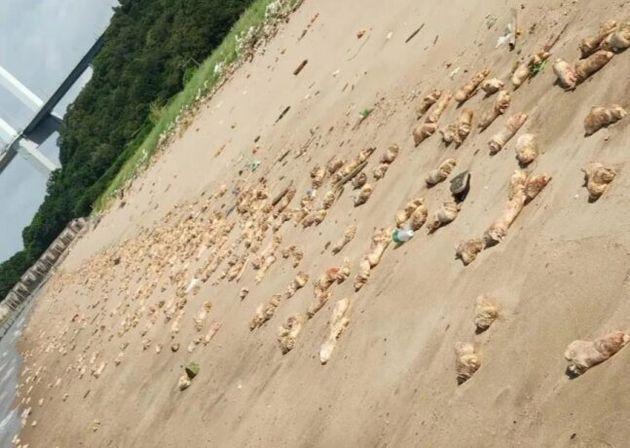중국 해안서 발견된