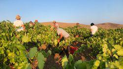"""""""Halarà"""", sei artigiani del vino per una casa comune a"""