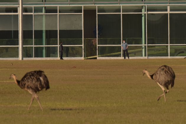 Βραζιλία: Γιγάντιο πουλί δάγκωσε τον Μπολσονάρο κατά τη διάρκεια της καραντίνας