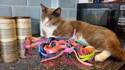 Το μυστήριο του γάτου που κλέβει γυαλιά κολύμβησης στο