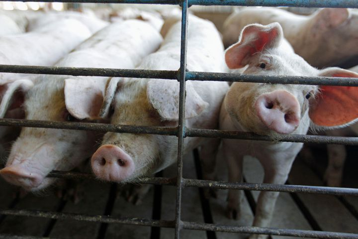 Meatpackers became hotbeds of COVID-19 spread in the spring, forcing several of the country's largest slaughterhouses t