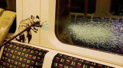 Des équipes de nettoyage effacent par erreur un Banksy du métro de