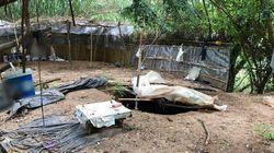 Καρτέλ Λατινικής Αμερικής στον Λούρο: Η ξηρά τροφή, οι φύλακες και οι