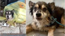 Cagnolino gettato in un sacco della spazzatura: Spillo è vivo per miracolo e cerca