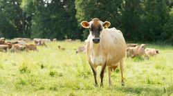 You Are What Your Cow Eats: The Health Benefits Of Grass-Fed Beef And