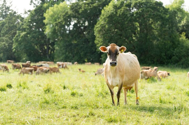 Farmer John Bansen's cows spend an average of 233 days on pasture and get 90% of their diet from living forages — supplemented only with balayage (a kind of fermented forage made by tightly wrapping just-harvested grass) in the winter months when grass isn't growing.