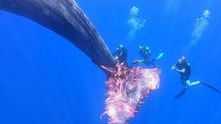 Guardacostas liberan a una ballena atrapada en una red de pesca