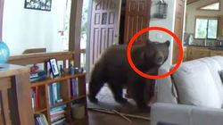 Big Boss Bear Bashes Down Door For Incredible Entrance Into