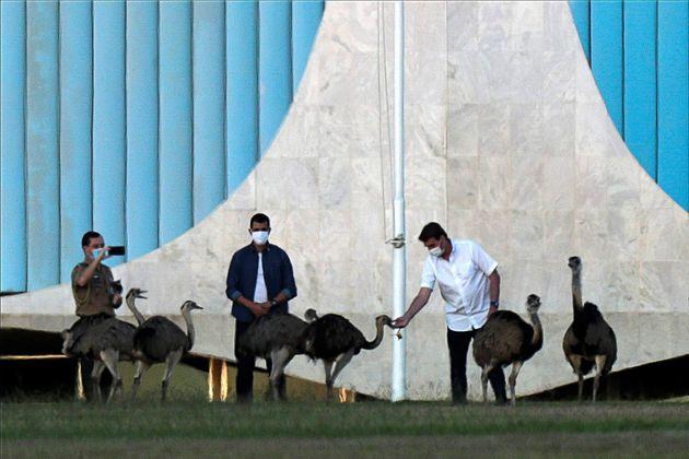 Não foi a primeira vez que Bolsonaro interagiu com as emas. Na última semana, ele foi alimentar...
