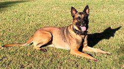 La Corse lance une campagne de dépistage du Covid-19 avec des chiens